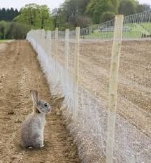 Rabbit Proof Garden Fencing Lovetoknow Animal Proof Garden Garden Fencing Fenced Vegetable Garden
