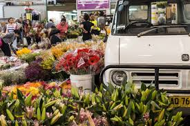 springtime blooms at the flower markets