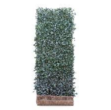 Hedera Helix Woerner Living Ivy Green Screens Green Walls Ivy Screens Green Tech
