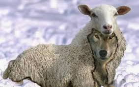 a wolf in sheep s clothing