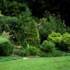 Landscape Mixed Shrubs Best Border To Hide Fence Archive Tulsaworld Com