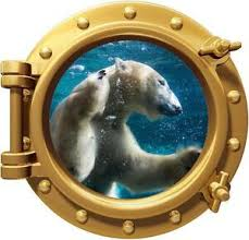 Polar Bear Porthole Decal Removable Graphic Wall Sticker Home Decor Art Animals Ebay