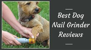 best dog nail grinder reviews january