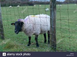 Animal Stuck Funny High Resolution Stock Photography And Images Alamy