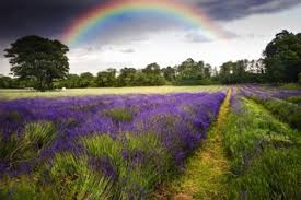 what does the bible say about rainbows a christian study
