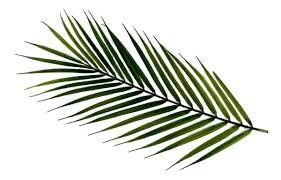 5 Buques De Mini Palmeira Artificia Com 9 Folhas Premium - R$ 317 ...