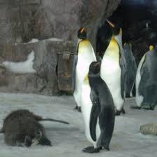 Kelly Tarlton's Antarctic Encounter & Underwater World Attractions Auckland  Voyage Conseils Adresse