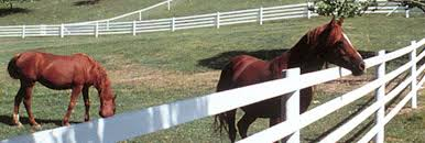 Pasture Fence Telehorse Stable For Horses Pvc