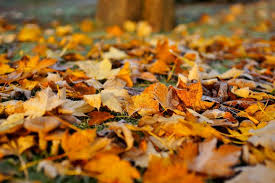 What to Do with Fall Leaves: 8 Ways to Use Fall Leaves | The Old Farmer's  Almanac
