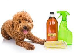 let s talk apple cider vinegar for dogs
