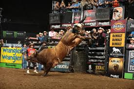 bull riding wallpapers hd wallpaper