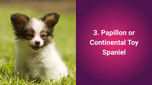 top 10 most cutest dog breeds in the