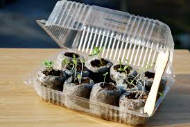 mini greenhouse with recycled items