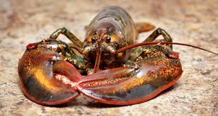 Warming pushes lobsters and other ...