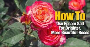 how to use epsom salt for brighter