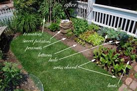 front yard vegetable garden one month