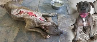 Ivy's Burns Need Your Help to Heal - Houston Pets Alive!Houston Pets Alive!