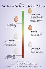 free range vs pastured eggs