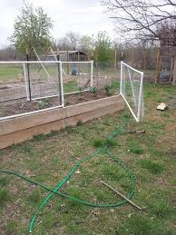 Jess Made Fence Gates For My Pepper Plants To Protect From My Chickens 6 T Post Pvc Pipes And Chicken Wire Chicken Wire Fence Backyard Fences Pepper Plants