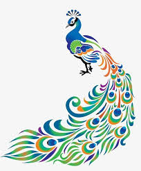 Image result for drawing peacock