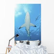 Oceanic Blacktip Shark Underneath Wall Decal Wallmonkeys Com