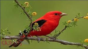 صور طيور نادرة وأجمل ما قد تراه عينك مجلة رقيقة Youtube