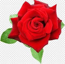 وردة حمراء وردة الأبيض Floribunda Png
