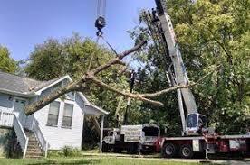 Bradley Tree Service | Tree Pruning | Cleveland, TN