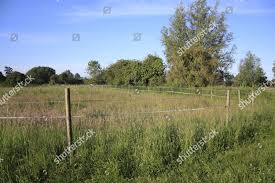 Electric Fencing Tape Around Horse Paddock Long Editorial Stock Photo Stock Image Shutterstock