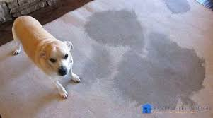 pet odors from previous tenant