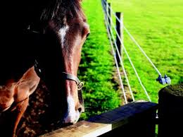 Constructing The Right Electric Fence For Your Horses