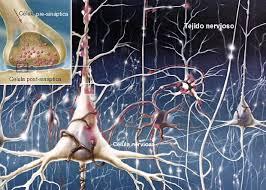Resultado de imagen de Axones del cerebro