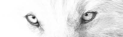 Eye To Eye Wolf Rear Window Graphic Rwg1390 Customautotrim