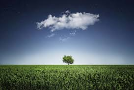 alone tree wallpapers full hd free