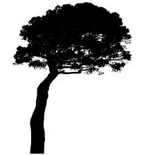 Tall Tree Silhouette Car Decal Sticker Gympie Stickers