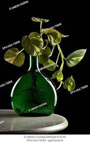concept money plant with green bottle
