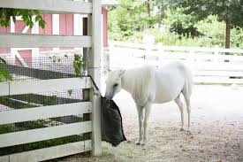 Slow Feeders For Horses How They Work The 1 Resource For Horse Farms Stables And Riding Instructors Stable Management