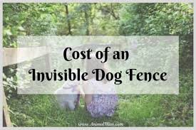 How Much Does An Invisible Dog Fence Cost