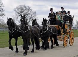 Spectacular London Harness Horse Parade Takes P