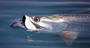 fish mounts official site