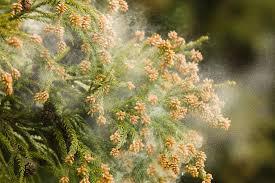 「花粉症」の画像検索結果