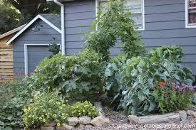 creative vegetable gardener why mulch