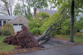 Townsville tree Lopping Services - Tree & Stump Removal