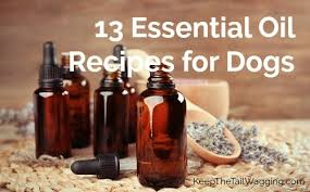 13 essential oil recipes for dogs