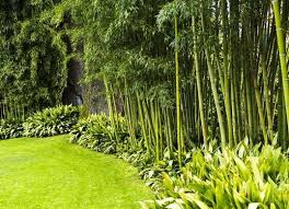 The Best 10 Plants To Grow For Backyard Privacy Privacy Landscaping Privacy Fence Landscaping Backyard Trees