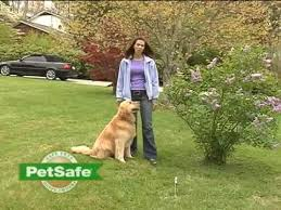 How To Train Your Dog On The Petsafe Containment System Youtube