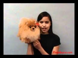 pamy pomeranian stuffed dog by aurora