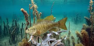 fish taxidermy fish replicas fish
