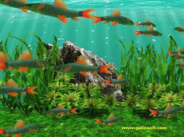 fish tank wallpaper fish tank