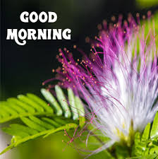 good morning whatsapp images for dp
